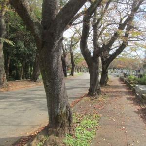 川崎市緑ヶ丘霊園のお墓掃除