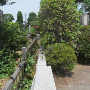 多磨霊園植木剪定