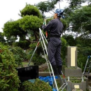 多磨霊園での植木剪定