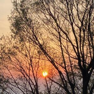 サロンからの夕日