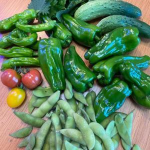 今日の収穫☆緑がきれい!