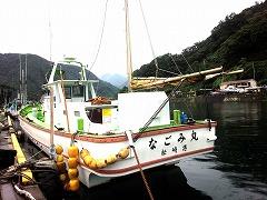 『スルメイカ;なごみ丸』初釣りは珍!^^;