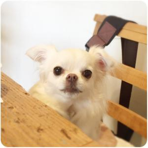 DOG CAFE & BAR GLOW(横浜 関内)