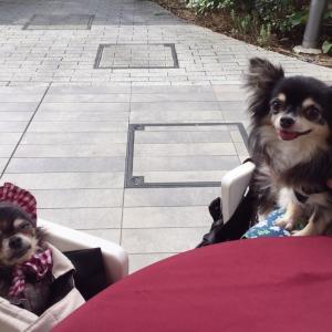 MIYASHITA PARKに行ってきました♪
