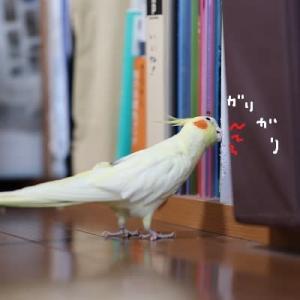 日本ダービー記念日(4月24日)