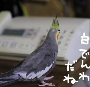 昭和の日(4月29日)