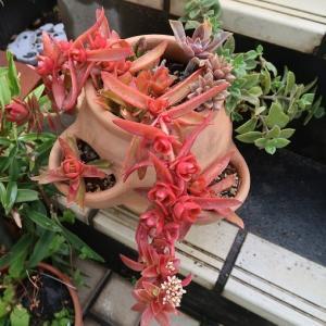庭の花たち2021春3月