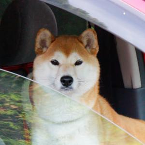 車内で待っていた来楽ちゃん 100527