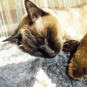 高齢猫ごんた 20080617