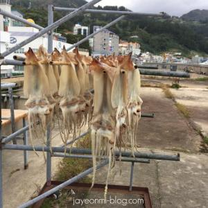 【韓国地方旅行】慶尚北道ウルルン島のイカをお取り寄せ♪