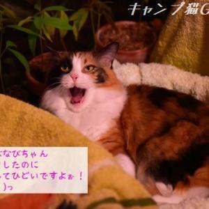 タヌキじゃないですねぇ(* ・`ω・´)っムッ! 避難ですよぉ!