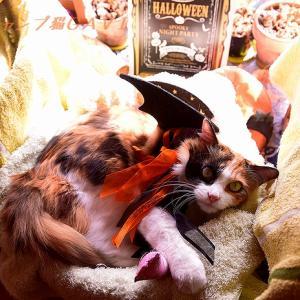 Hapy Halloween! クーちゃんの応援ありがとうございますですよぉ!