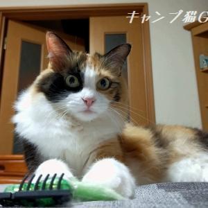 セルフイメージは子猫ぉ? 立派なおとにゃにゃんこですよぉ!( ̄^ ̄*)ゞエヘン