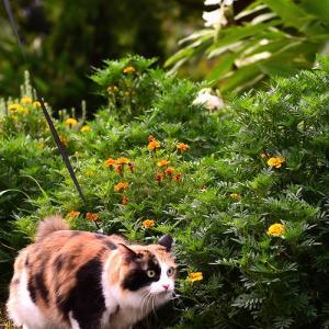 草食べTibiTibiはなびちゃん & 虎さんだったり大ヘビだったり