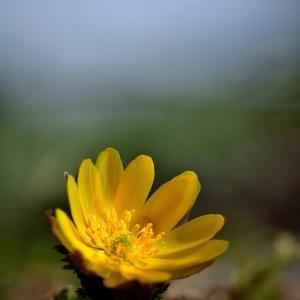 みちのく春の野花6