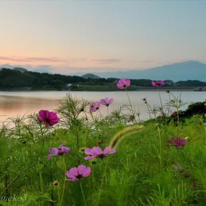 みちのく御所湖秋桜景
