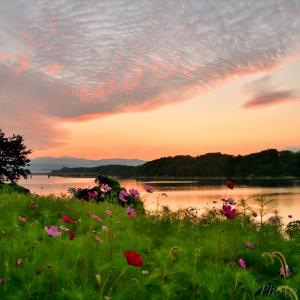 みちのく御所湖秋桜景2