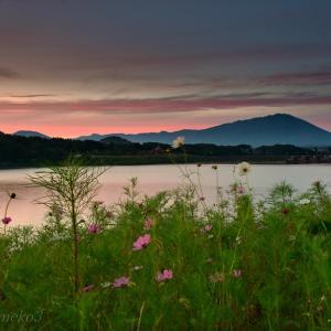 みちのく御所湖秋桜景4