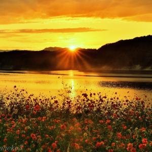 みちのく御所湖秋桜景5