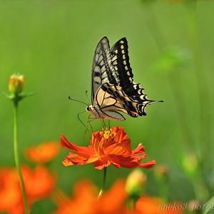 みちのく花と蝶3