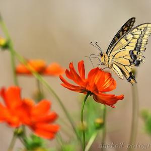 みちのく花と蝶7