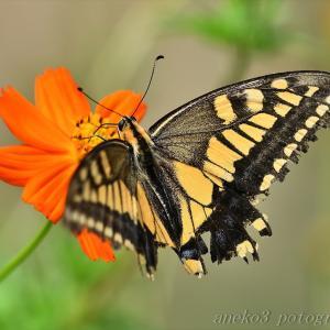 みちのく花と蝶8