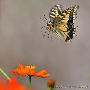 みちのく花と蝶9