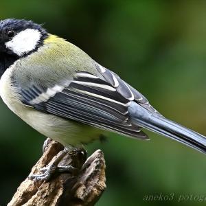 みちのく小鳥たち28