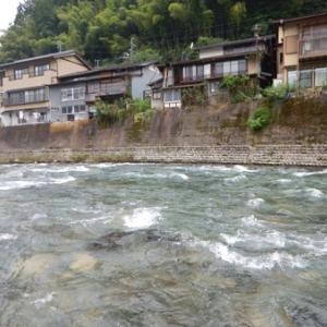 清流 吉田川で鮎釣りィィ