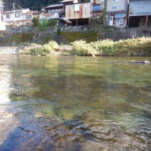 郡上で鮎釣り 吉田川から長良川