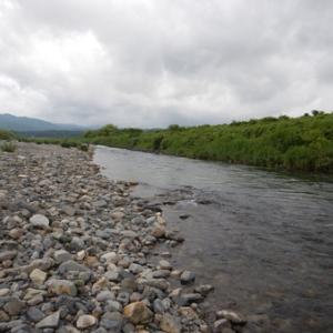 安曇川広瀬で鮎釣り釣り(^・ェ・^)