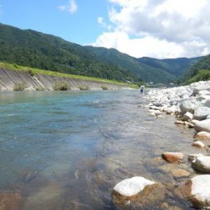 今年の馬瀬川はどうかな?