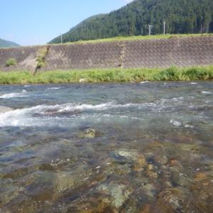 馬瀬川で良型狙い^ - ^
