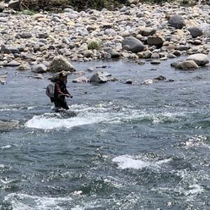 長良川の回復力は凄いね^ - ^