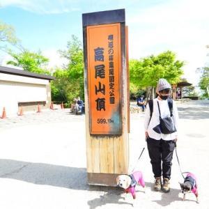 犬と高尾山に行ってきました♪(その2)