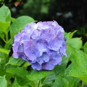 雨が似合う花Ⅱ