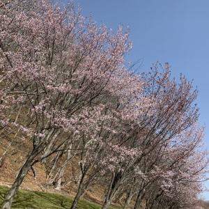 ようやく春のアブラコHIT!