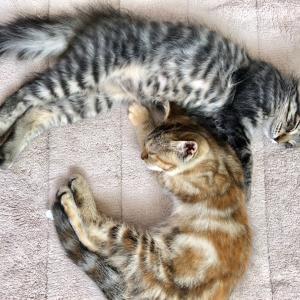 第40回 譲渡会 参加猫⑧ 【ぷらむ】【らいち】【きのこ】【たけのこ】【ビビ】