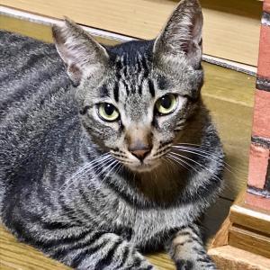 第40回 譲渡会 参加猫(11) 【ボク】【ルル】【しまちゃん】