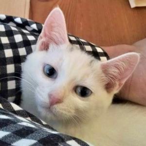 第41回 譲渡会 参加猫 ⑤ 【ヤネス】【ジャック】【ほくと】【