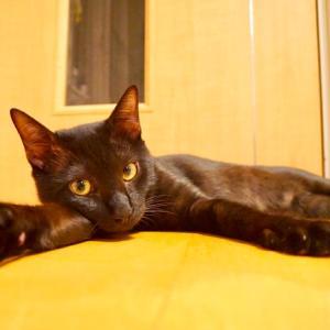 第41回 譲渡会 参加猫 ④ 【ジジ】【ミケ美】【ミケ代】【まめもち】【きなこもち】