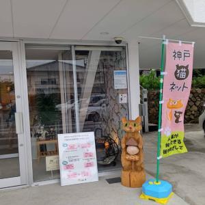 第2回「保護猫譲渡会@猫の屋おでん」開催のお知らせ!