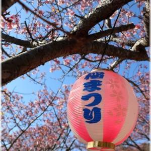抱湖園 の 元朝桜