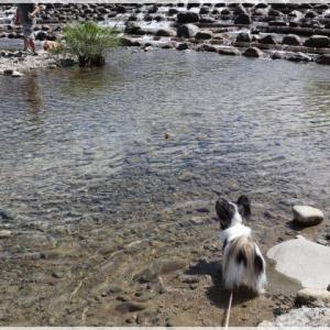 登川河川公園で 水遊び!