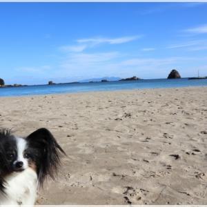 IZUへ! - 2 ~ 美しい海で のんびりと ~