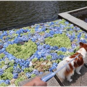 公園散策♪ - 1 ~ フローティングフラワー ~