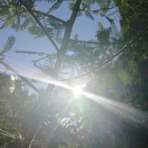 ◆光をたたえて過ごしたい◆