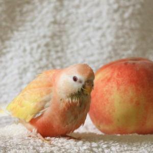 ◆桃ともも。◆