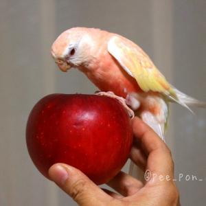 ◆りんごともも◆