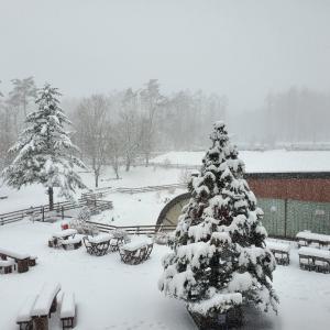 現在のワフの雪の様子